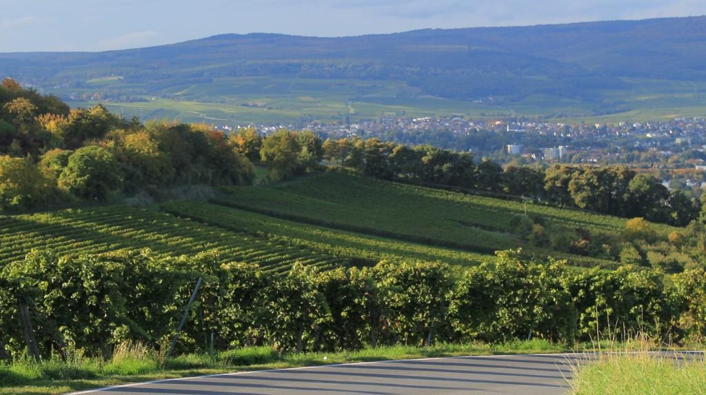 Bild: Sabine Kanzler - Blick vom Westerberg auf Ingelheim