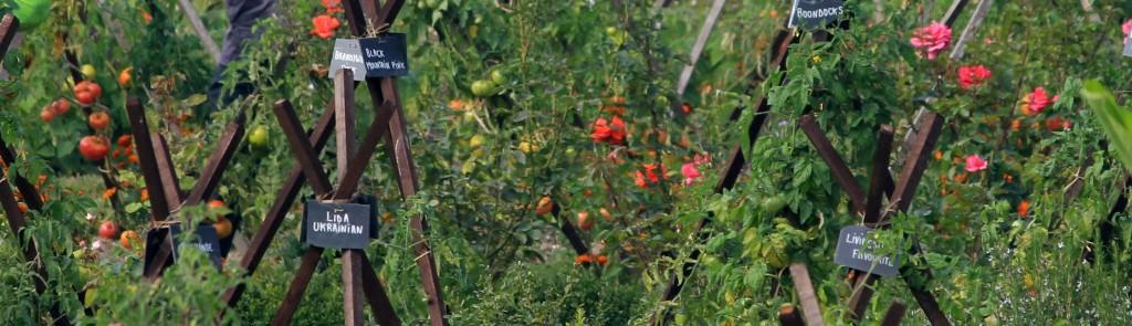 Bourdaisiere Tomatengarten 4
